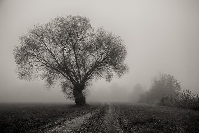 tree-3153571_640